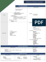 20150901-Tableau Des Principales Bacteries PDF