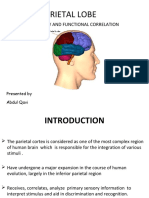 pptparietallobe-150618151045-lva1-app6892.pdf