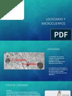 Lisosomas y Microcuerpos