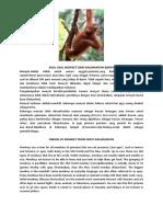 Asal Usul Monyet Dari Kalimantan Barat