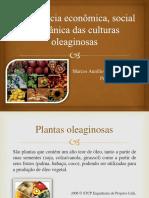 Importância Econômica Social e Botânica Das Culturas PDF.1