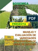PREPARACION, CULTIVO DE CAÑA DE AZUCAR.ppt