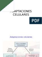 Clase 2. Anatopato - Adaptaciones Celulares
