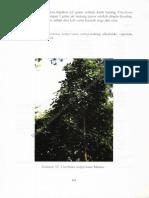 34-99Z_Book Manuscript-62-1-10-20130606