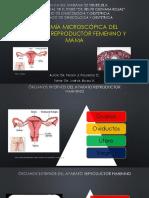Anatomia Microscopica de Femenino