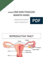 Anatomi Dan Fisiologi Wanita Hamil