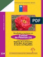 Peonias Chile