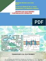 SESIÓN 18 TRANSPORTE DE ELECTRONES Y FOSFORILACIÓN OXIDATIVA.pptx