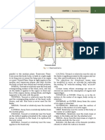 dissection terms.pdf