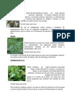 Docdownloader.com Plantas Medicinales
