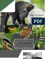 Tipos de Fauna y Especies