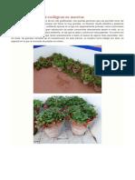 El Renovado de Fresas Ecológicas en Macetas