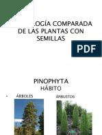 Morfologia Comparada de Las Plantas