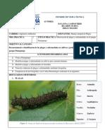 Informe Visita Tecnica - Identificacion de Plagas y Enfermedades en El Parque Pumapungo