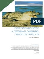Explotacion de Especie Autoctona Caiman Del Orinoco en Venezuela