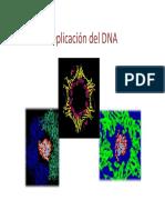 Replicacion_9218.pdf