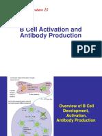 b cell (1).pdf