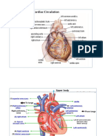 Illustration (Cardiac)