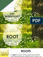 Plant Anatomy and Morphology (1)