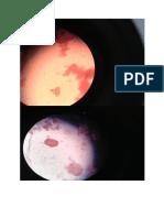 gambar parasit.docx