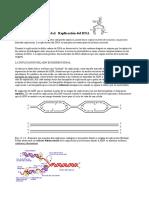 Replicacion DNA