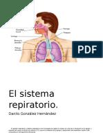 El Sistema Repiratorio Trabajo Escuela Danilito 5to Grado