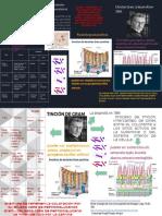 Infografia Contreras Rojas Amauri