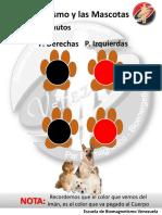 Protocolo Bio-Mascotas.pdf