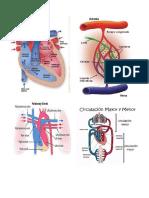 Mapas de Cardiovascular y Pancreas