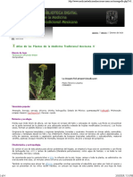 Taraxacum Officinale Weber Diente de Leon