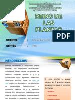 Diapositiva Reino de Las Plantas