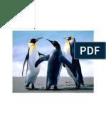API 650 DCPee design 1.docx