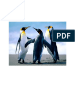 API 650 DCPee Design 2
