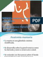 Presentacion Mamas Anatomia HBC