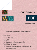 1. Schizophyta