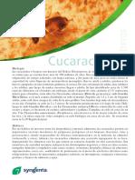 Ginf Pt 001 Protocolo Procove
