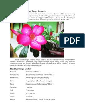Laporan Hasil Observasi Bunga Kamboja Seputar Laporan