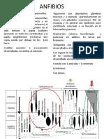 ANFIBIOS_2018.pdf