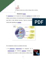 2BiologiaMetabolismocelular.pdf