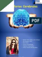 División-cerebral ppt original 1.pptx