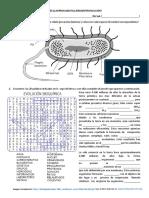celulas-procariotas-origen-y-evolución-SOL.pdf