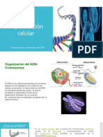 ADN y Reproducción Celular