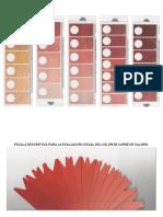 Escala Color de carne SAGARPA