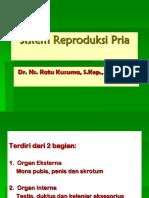 1a. Organ Reproduksi Pria (Rev 2017)