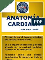 Anatomia Cardiaca