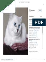 Coby the Cat (@Cobythecat) • Fotos e Vídeos Do Instagram