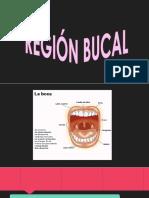 reginbucal-150728171526-lva1-app6891.pptx