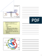 Anatomia Sistemului Limfatic 2008 Mic