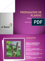 PP.PPASEXUAL.pdf