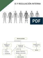 PSU - Homeostasis y Líquidos Corporales